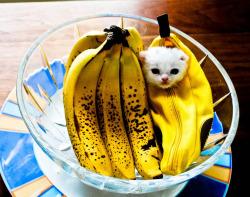 kitty cat submission banana