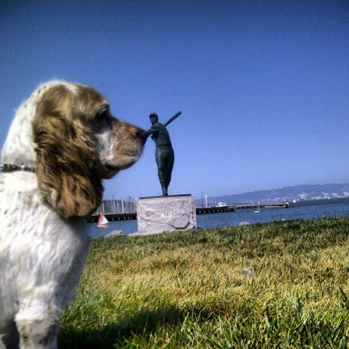 Scooby's day out. #dog #cockerspanial #attpark #williemccovey #mccoveycove (Taken with instagram)