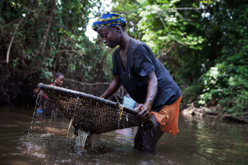 A woman uses a net to catch fish in a pool of water near the city of Makeni in Sierra Leone, April 20, 2012