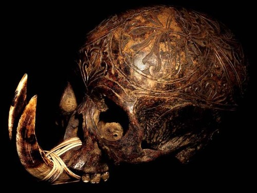 whoreofbabalon:  DAYAK CARVED: HEAD HUNTING HUMAN TROPHY SKULL WITH TWO BOAR TUSKS + RATTAN LASHING HAND CARVED HUMAN BONE