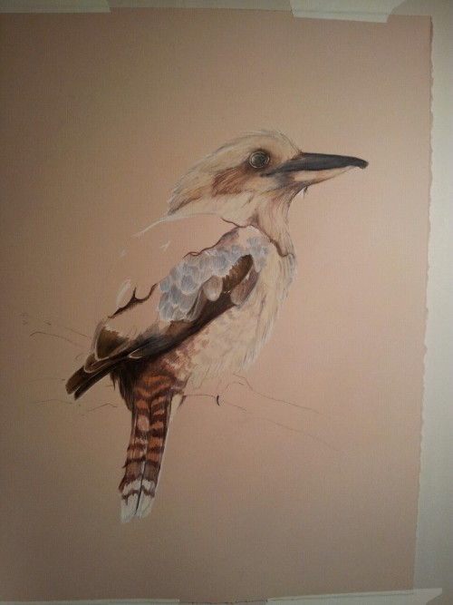 Kookaburra in progress