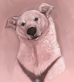 Polarbear dogs………I said that outloud a la Timmy Turners dad.  quickie portrait in open canvas
