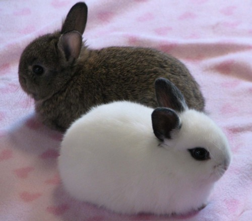 two little buns buns buns