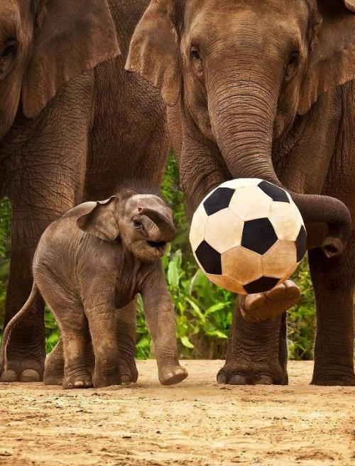 llbwwb:Attitude is everything: 'Great kick, ma!' By:jujuba Submit your Animal shots and Cute Pets today :) You have to follow this blog, it's really awesome!