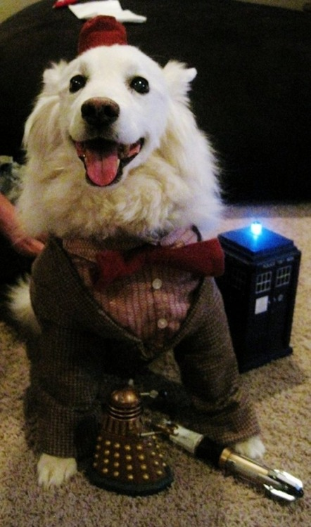 pleatedjeans:  Dr. Woof. via