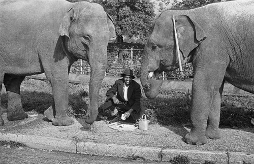 Circus elephants at Chirk by LlGC ~ NLW on Flickr.Look at the photo. Consider what has has just happened here, or what is about to happen here. Who has been here? Who will come here and and what will they do? What kinds of interactions can you imagine? Write one leaf about these or other things that occur to you upon looking at the picture. Do not allow yourself to be limited by what you see. Go.| Write One Leaf + about + ask + random + facebook + twitter | sponsors + You Are a Dog [ Kindle | Google | iBookstore ]