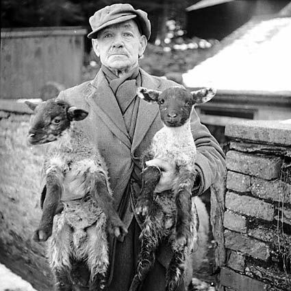 Man with New Year twin lambs by LlGC ~ NLW on Flickr.Look at the photo. Consider what has has just happened here, or what is about to happen here. Who has been here? Who will come here and and what will they do? What kinds of interactions can you imagine? Write one leaf about these or other things that occur to you upon looking at the picture. Do not allow yourself to be limited by what you see. Go.| Write One Leaf + about + ask + random + facebook + twitter | sponsors + You Are a Dog [ Kindle | Google | iBookstore ]
