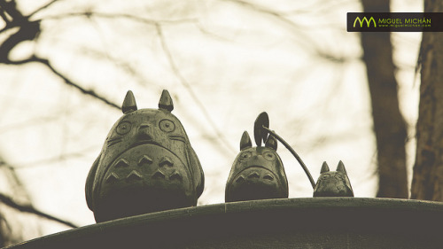 japanlove:  O-Totoro, Chu-Totoro & Chibi-Totoro : Ghibli Museum, Mitaka, Japan / Japón by Lost in Japan, by Miguel Michán on Flickr.