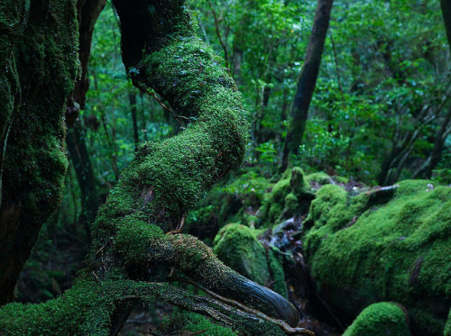 Moss covered roots, Yakushima island by caseyyee on Flickr.Lots of moss everywhere.  Very soggy! 67mm f/8 4sec @ ISO 400
