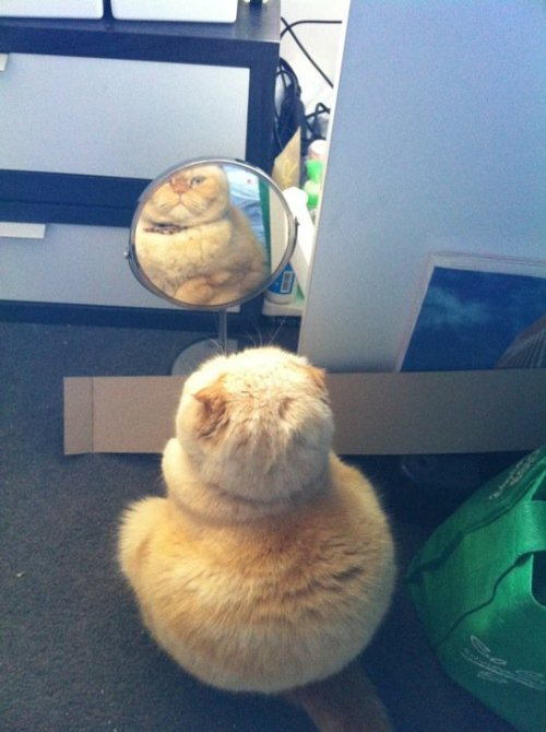 the-absolute-best-posts:  danceswithfaeriesunderthemooon: when will my reflection show who i am inside   My lovely followers, please follow this blog immediately!
