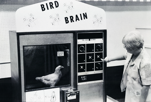 vintagegal:  Tic-Tac-Toe Playing Chicken at Webb's City , St. Petersburg, Florida (1976)