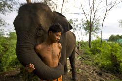 theanimalblog:  A man and his elephant