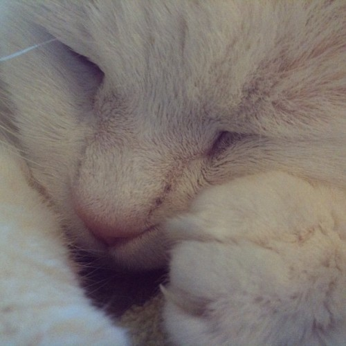 Sleepy #cat closeup (Taken with instagram)