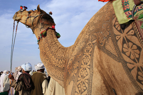 su-nchild:  luna-light:  whooooa that's a cool camel  Are thy camel tattoos?!