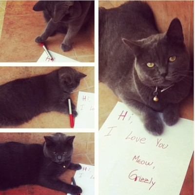 Grizzly loves you. #cat #gato #gatito #love #letter #message #fans