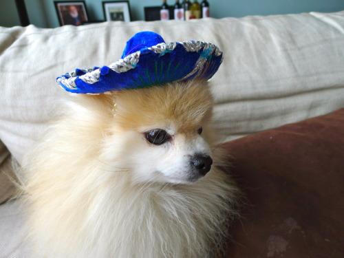 tommypom:  cinco de mayo is around de la corner!