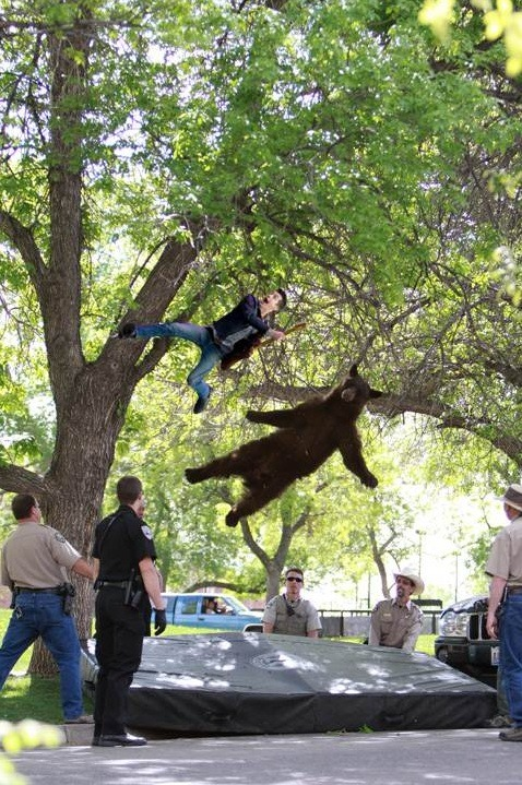 Jumping Alex falls from a tree with his bear friend