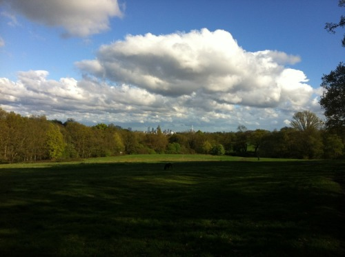 Hampstead Heath . London City Skyline
