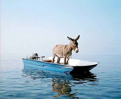 A donkey on a boat Photographed by Paola Pivi at the coast of the island Alicudi.Paola Pivi  is an Italian multimedia artist who lives and works in Anchorage, Alaska. In her work, she uses a wide range of art techniques, such as photography, sculpture and performance. Some of her works contain performance elements, at times involving live animals and people. In 1999, she received Golden Lion Award at the Venice Biennale.