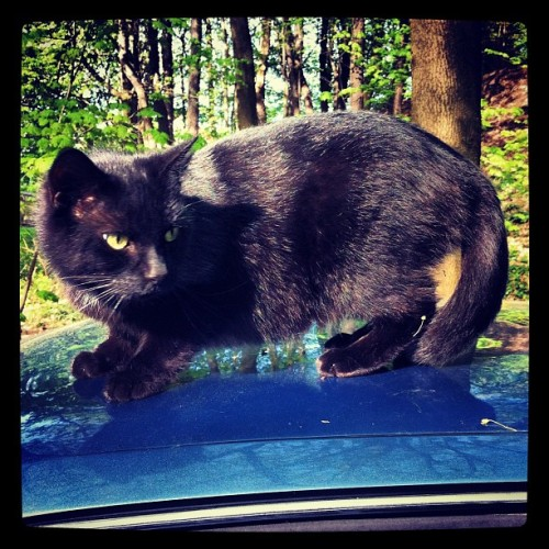 Cat on my car, just chillen. (Taken with instagram)