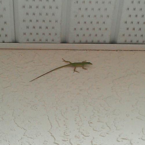 Dat lizard. (Taken with instagram)