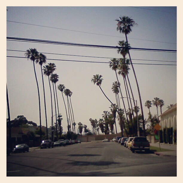 Even the palm trees in East LA are ghetto. (Taken with instagram)