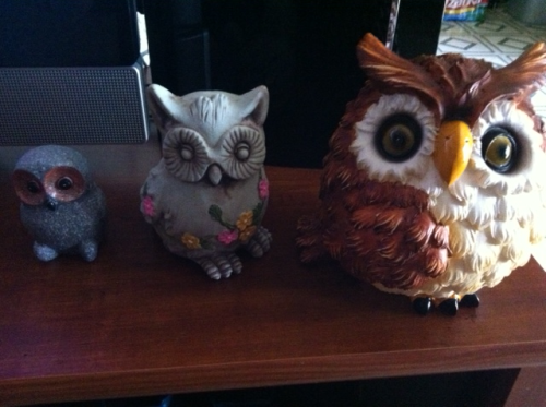 My family of hooters (owls)