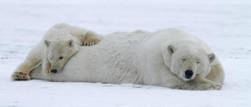 wondermarley:  Save the Arctic! Help to Stop shell from oil drilling.SIGN THE PETITION :) http://www.greenpeace.org.au/action/index.php?cid=22