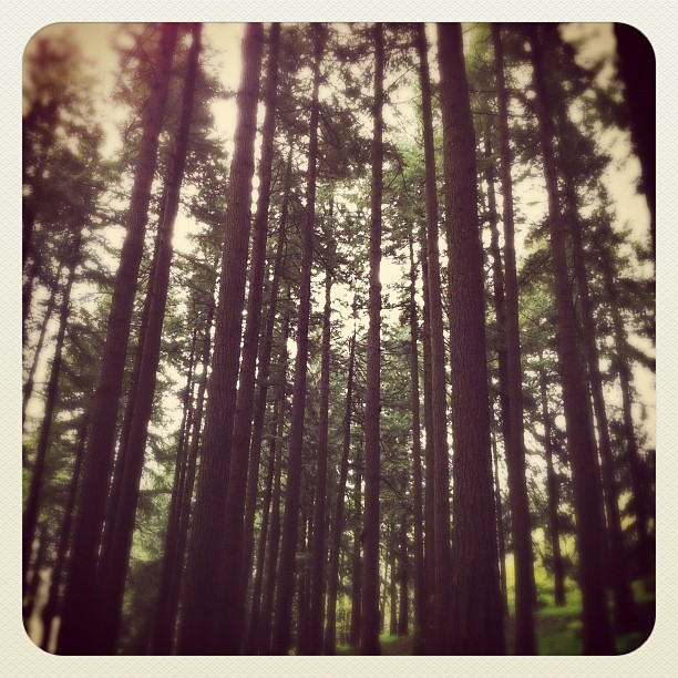 Oregon loves me.  (Taken with instagram)