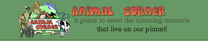 Animal Corner Nice site to learn about animals. May work well for research and projects. #elemchat #spedchat #scichat #animals Students will find information, illustrations, photos, quizzes, polls and more. Well done site. Easy to navigate. Included in  Amazing Animals for Kids You may also like… Animal Tribe Kind News Museum of the Dead Art Tales: Telling Stories with Wild Life Art Ology