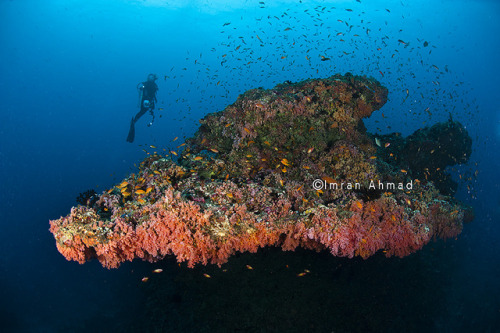 TECHNICOLOR REEF on Flickr.TECHNICOLOR REEF By Imran Ahmad www.escapeinc.com.sg