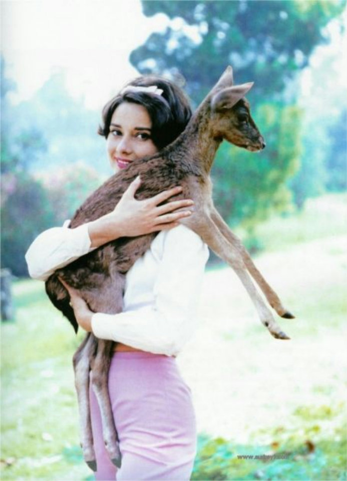 Audrey Hepburn and her pet deer Pip