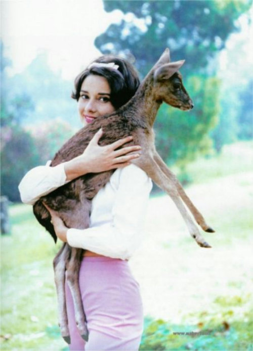suicideblonde:  Audrey Hepburn and her pet deer Pip