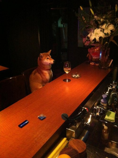 collegehumor:  Dog Sits Alone at Bar with Glass of Wine His bar is worse than his bite. POS AQUÍ NOMAS, CASUAL YO A LOS 40.