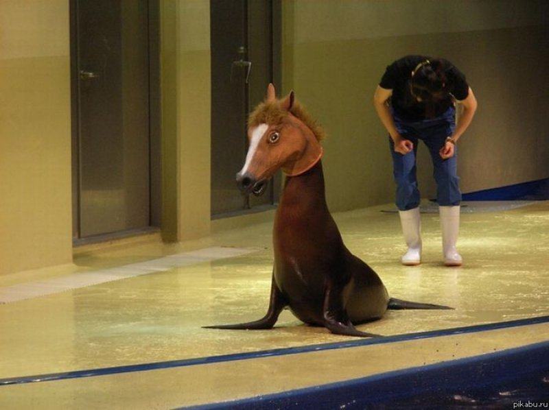 collegehumor:  Seal with a Horse Mask Around here we call that a sea horse.  This picture is my bosses' background on the office computer