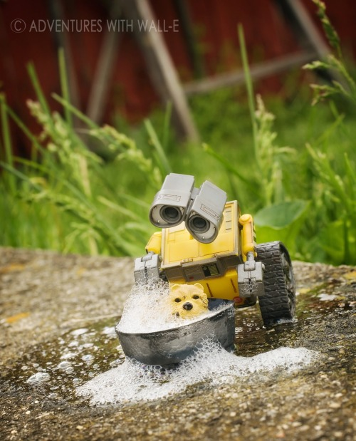 Wall-e gives Mr. Snoopers a bath. 121/366