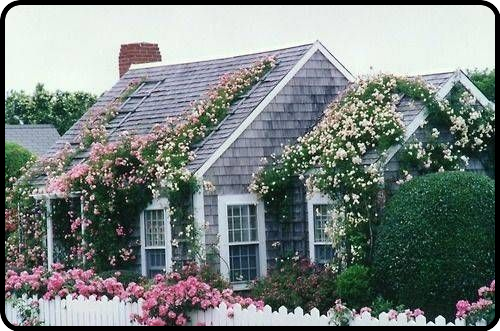 rose covered cottage…want one for the summer :)