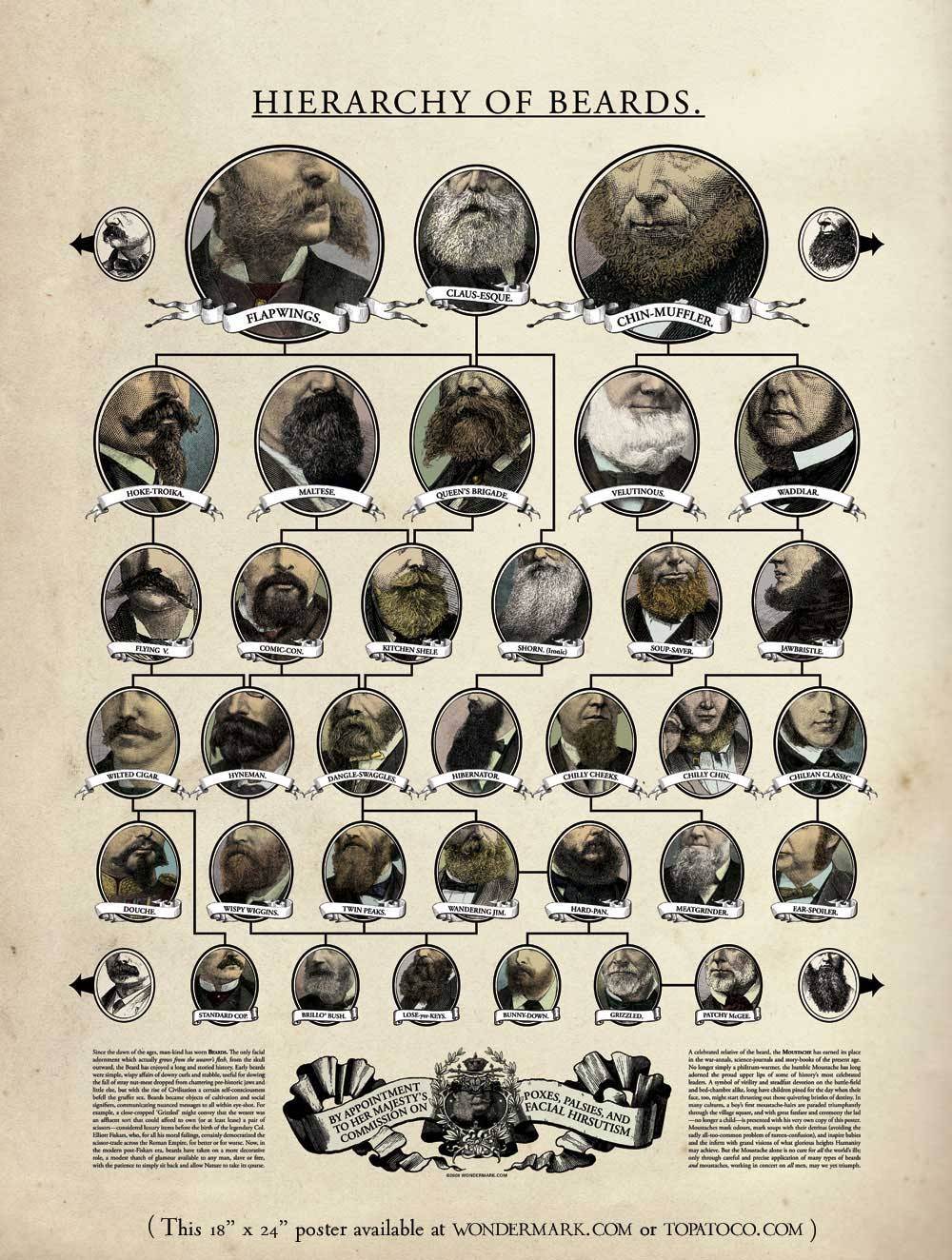 Hierarchy of Beards by Wondermark (poster available) full size