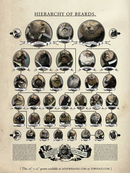 ilovecharts:  Hierarchy of Beards by Wondermark (poster available) full size