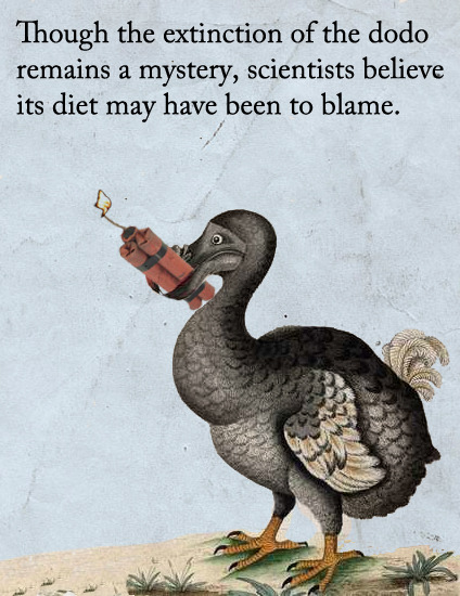 The Extinction of the Dodo