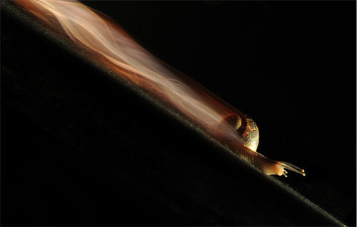 detectivemajesty:  Long exposure of a snail over 1 hour 32 minutes and 34 seconds.  This snail looks like it has a twin turbo.