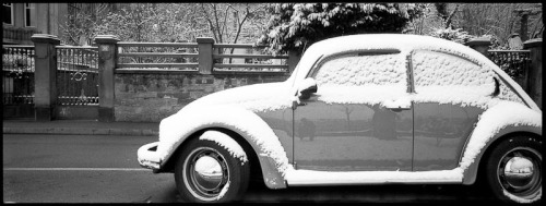 snow covered beetle by Chicken®
