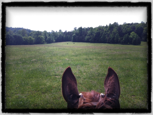A perfect Saturday riding at McRae Training Center in SC