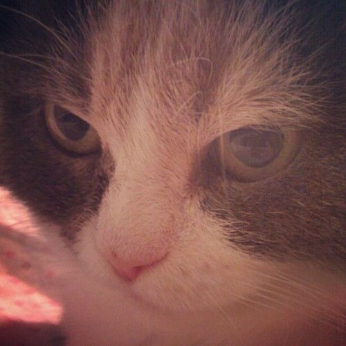 #cat (Taken with instagram)