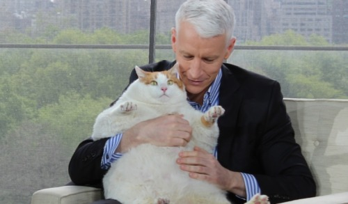 Anderson Cooper holding Meow, the 37lb. cat.