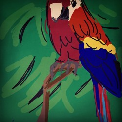 #drawsomething #parrot (Taken with instagram)
