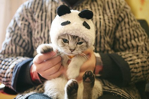 Kitty rocking the panda style -_#