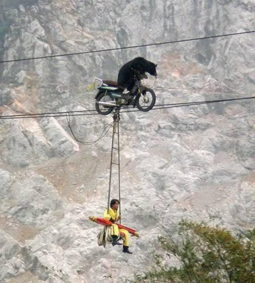 Man Hangs from Motorcycle on Tightrope Driven by Bear They say this is the safest way to travel.