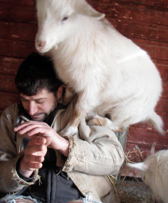 melanyouth:  (via goatsonthings):  Goat on a man.  Be calm and be under a goat.  !!!  Tragos-endorsed.