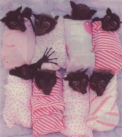 Bat Burrito Buffet